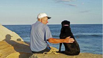Animalterapia, terapia con animales.