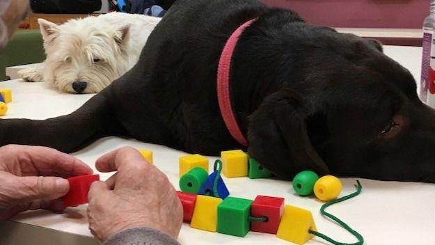 Los perros, herramienta de recuperación cognitiva en los centros de L'Onada Serveis