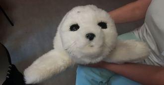 Mirando al exterior. Flocon, el robot foca japonés para ayudar en los servicios geriátricos