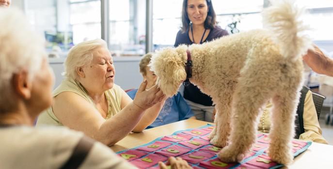 Cuatro centros de mayores de Guadalajara incorporan la terapia asistida con animales