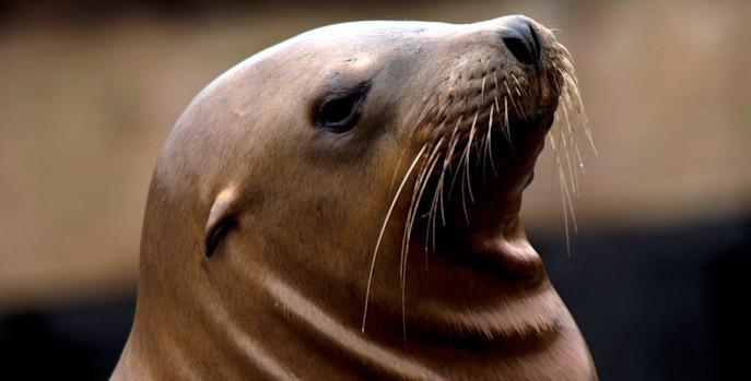 Residentes de Novaire El Campello hacen terapia con leones marinos