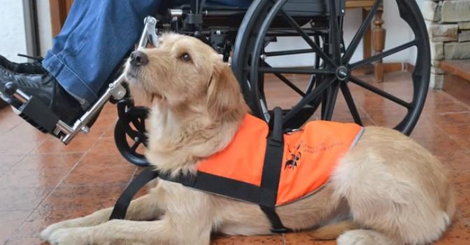 CyL garantizará por Ley los perros de asistencia para promover la autonomía personal