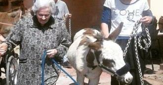 Terapia con burros en la residencia de mayores Ítaca de Arenys de Munt