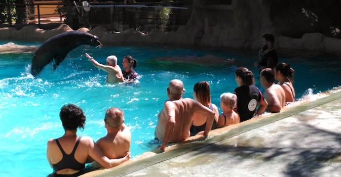 Jugar con leones marinos o hidrogimnasia: el verano es también para los mayores